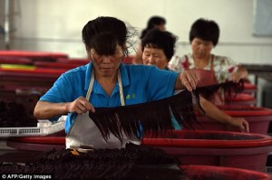 Exports of human hair have boomed in popularity and is mainly produced in Taihe, in the eastern province of Anhui that is home to more than 400 companies